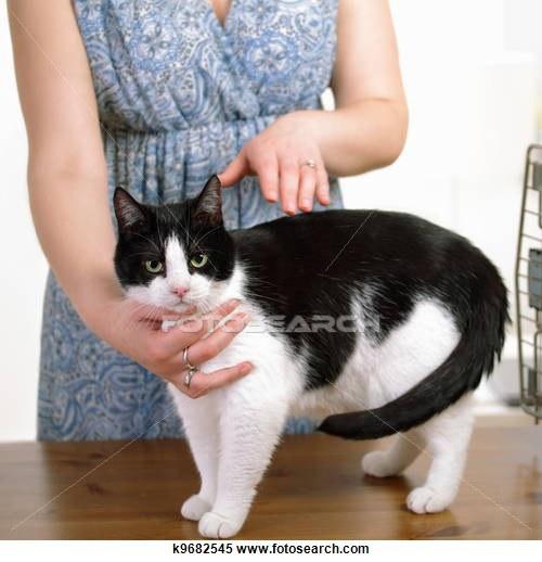 Kucing atau anjing Anda gering alias sering sakit-sakitan ? Tak ada salahnya mengalirkan reiki ke binatang kesayangan agar kembali sehat.