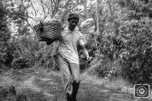 Pak Suwarno dengan santai berjalan pelan sambil memikul belerang yang baru saja ditimbang di Pos Bunder, dalam perjalanan menuju Pal Tuding. Terkadang mereka bersenandung uro-uro gending Osing Banyuwangi.