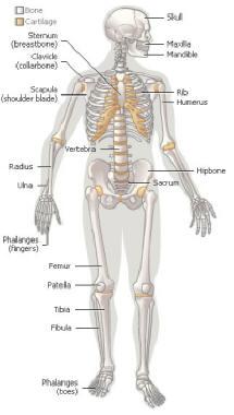 Gambar Anggota Tubuh Manusia