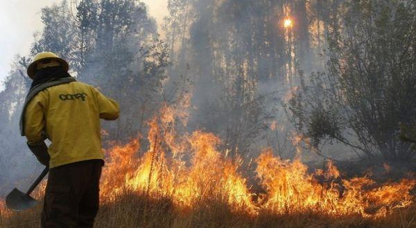 api membakar hutan florida Kebakaran Hutan Tanggung Jawab Siapa?