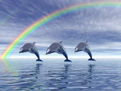 Lumba-lumba yang sudah terlatih, dapat melompat secara bersamaan dengan lumba-lumba lain.
