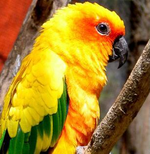 Selain binatang peliharaan berkaki empat, burung yang m
