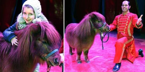 Fridolin kunda mini dengan poni dikepalanya, saat beraksi di panggung sirkus.