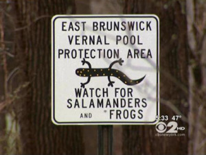 A road in East Brunswick, N.J., is closing Wednesday night for salamander crossing.