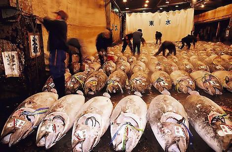 tuna's struktur dan lemak perut menjadikannya salah satu ikan yang paling dicari untuk sushi. Pasar Ikan Tsukiji memiliki lebih banyak untuk menawarkan selain hanya tuna.