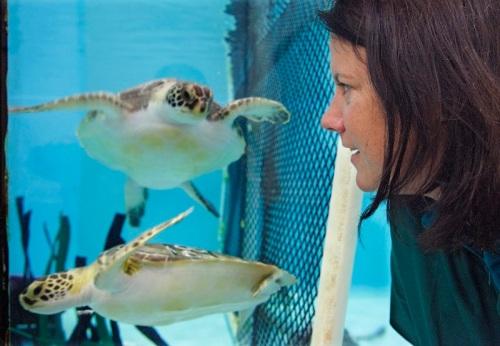 Claire McManum mengawasi sepasang penyu Dexter dan Fletcher Moon sehabis menjalani sesi tusuk jarum. Kedua penyu itu sudah aktif berenang menggunakan siripnya dalam akuarium perawatan di Quincy.