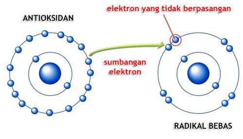 antioksidan-dan-radikal-bebas