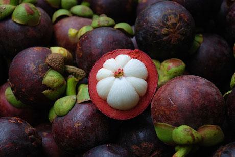 Namun, Anda jangan kaget, kulit buah manggis banyak mengandung senyawa xanthone yang berguna untuk Pencegahan Kanker. Xanthone mempunyai aktivitas antiinflamasi dan antioksidan. Sehingga di luar negeri buah manggis dikenal sebagai buah yang memiliki kadar antioksidan tertinggi di dunia.
