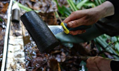 Lapisan karbon yang terdapat di lahan gambut di Kongo. ( sumber: BBC )