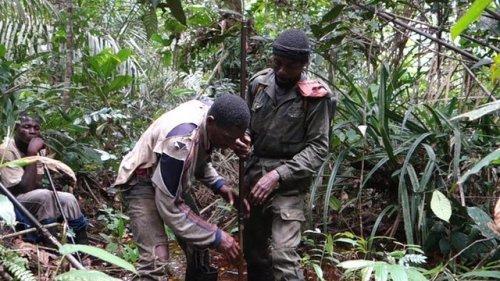 Penelitian adanya karbon pada area  masuk hutan rawa gambut Kongo-Brazzaville.