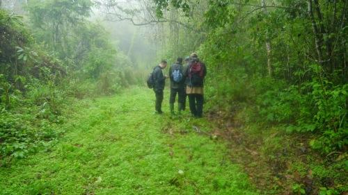Tim ekspedisi nuri amazona sedang mempersiapkan diri untuk mengamati perlilaku nuri amazone dalam hutan amazona.