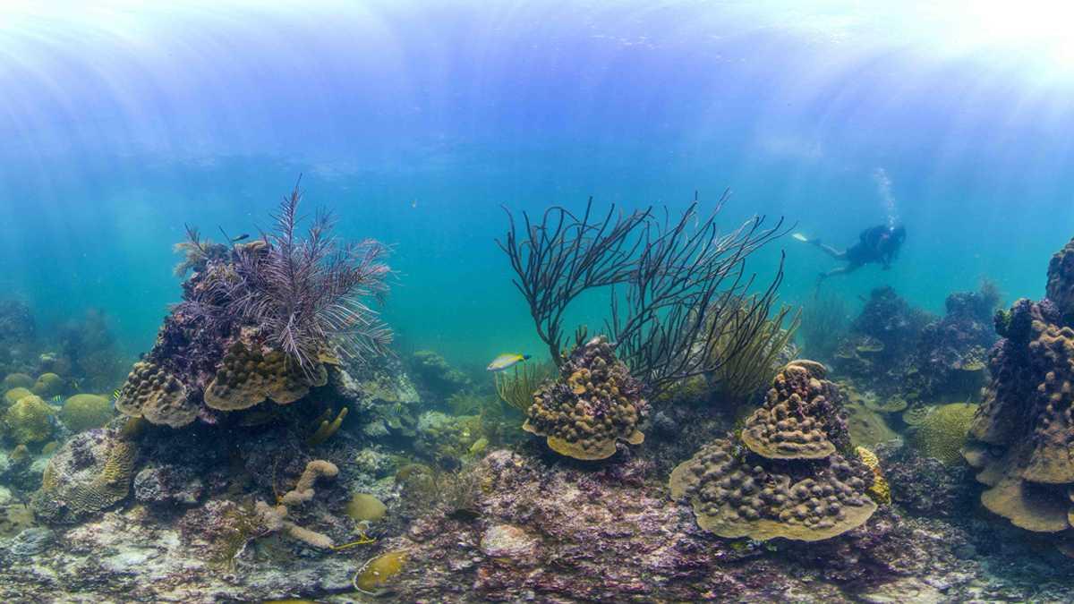 Bayangkan - bulan purnama di atas laut terbuka. Jika Anda berpikir bahwa suara romantis, Anda tidak sendirian. Itulah Penn Profesor Alison Sweeney menjelaskan kehidupan seks misterius karang.