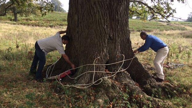 Pengobatan berpotensi membantu menyelamatkan pohon dari nilai sejarah atau sentimental