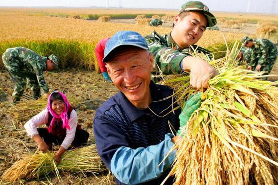 Panen Raya padi di areal persawahan petani