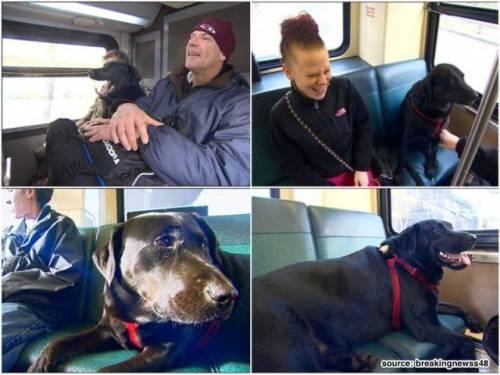 Tatkala bus berjalan perlahan di keramaian kota Seattle, Eclipse tertidur pulas layaknya penumpang lain.