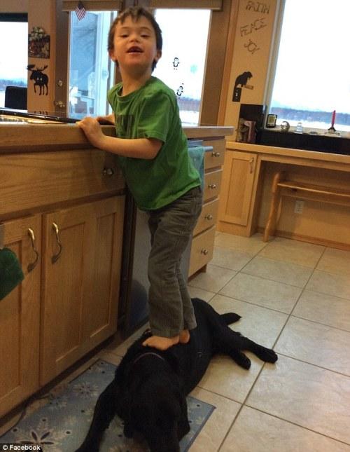 Sebagian sekuen saat Trig menginjak Peta, anjing labrador milik ibunya yang berbaring di lantai dapur rumahnya.