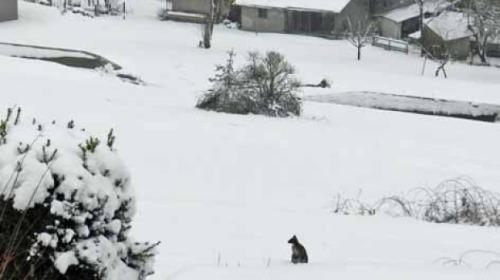 Anton si kangguru Austra terlihat di halaman rumah dekat kota