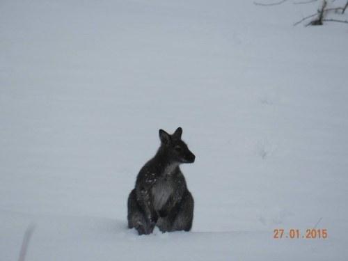 Salju yang turun di kota tak menghalangi Anton untuk duduk santai di atas salju.