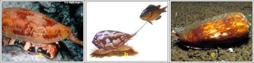 Begitu mangsa mendekat, hormon insulin dilepaskan melalul moncong mulut besarnya.