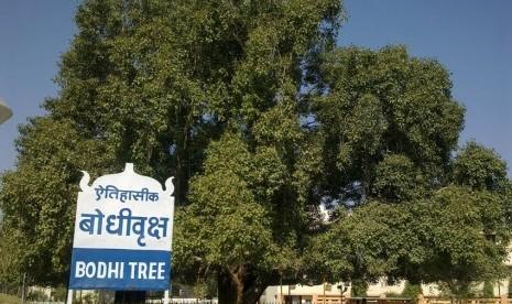 pohon Bodhi dikenali dari daunnya yang berbentuk hati, dan biasanya ditunjukkan dengan nyata. Pohon-pohon Bodhi biasanya ditanam di dekat setiap biara Buddha.