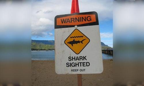 Hindari perairan ini karena banyak hiu putih berkeliaran mencari mangsa.