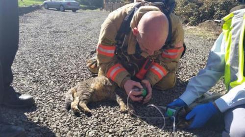Petugas pemadam kebakaran Oregon memberikan Oksigen darurat ditiupkan ke mulut kucing o