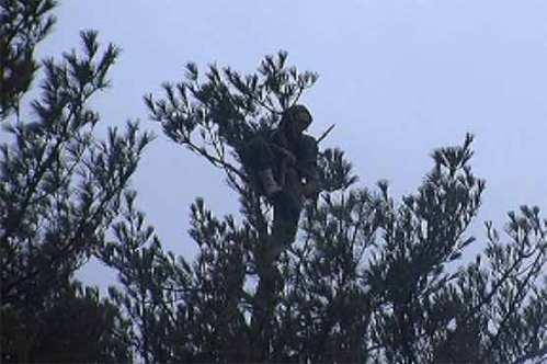 Takut tertangkap polisi yang mengejarnya, Richar Poula Jr nekat naik pohon yang berdiri di pinggir tebing curam.