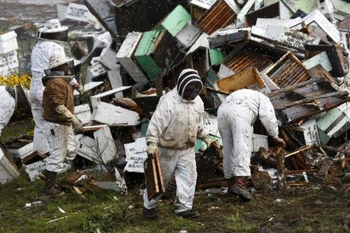 Sangkar lebah yang masih utuh diamankan petugas pemadam kebakaran untuk tempat menyimpan kembali lebah yang bisa ditangkap.