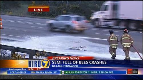 Sebagian besar lebah yang berkerumun di jalan, akhirnya dimusnahkan dengan menyemprotkan busa oleh petugas pemadam kebakaran.