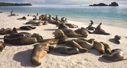 Pusat mamalia laut di California telah merawat sekitar 940 singa laut yang terdampar, kebanyakan anak-anaknya, sepanjang tahun ini.