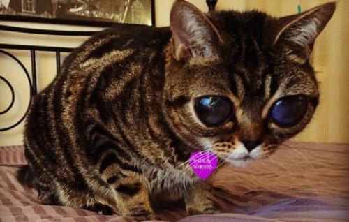 Sekilas Menggemaskan, Mata Kucing Ini Berbinar-Binar Akibat Kelainan Langka. Matilda.