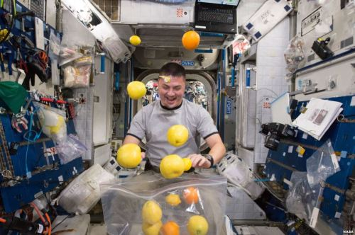Astronot NASA Kjell Lindgren sedang mengatur pasokan buah segar yang tiba melalui Kounotori 5 H.