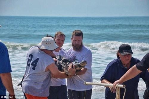 Akhirnya buaya itu berhasil diamankan petugas pantai, polisi, dan ahli hewan liar yang langsung datang ke pantai begitu mendapat panggilan darurat bahaya dari polisi South Carolina.