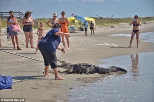 Pengunjung pantai hanya jadi penonton saja saat Hengst mendekati buaya yang telah diikat.