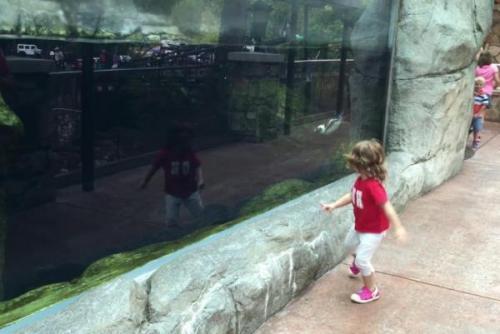 Hala penguin bermain dengan balita bernama Brynn di Akuarium Ripley Smokies di Tennessee . Screenshot video yang Jukin Media.