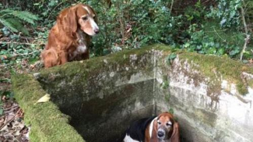 Anjing Ini Setia Tunggui Temannya yang Terjebak di Lubang Selama Seminggu.