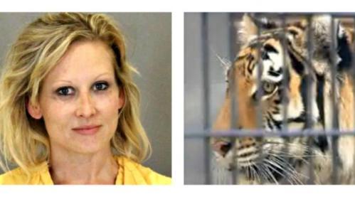 Karena ingin iseng untuk Halloween, wanita ini nekat melompat ke kandang harimau. Tangan wanita itupun digigit harimau.