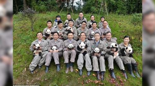 Pengasuh anak-anak panda merasa senang, bahkan merasa bahagia tak menampakkan wajah lelah seharian merawat anak-anak panda. Sebagai bentuk kegembiraan, mereka berfoto bersama di Bifengxia Panda Base.