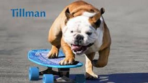 Anjing Pemegang Guinnessworld Record Ini Mati Kena Serangan Jantung.