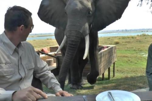 Gajah mempersiapkan untuk menyerang Stephen Montague dan Shane Serigala di Mana Pools taman margasatwa Zimbabwe . Screenshot video yang JukinMedia.