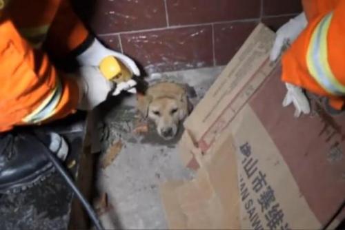 Petugas pemadam kebakaran di Provinsi Anhui , China , bor untuk menyelamatkan anjing dengan kepala terjebak di dinding . Video screenshot Newsflare . HEFEI