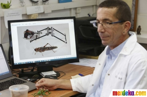 profesor israel belalang robot