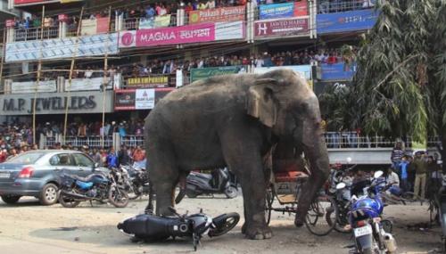 Menurut kantor berita Xinhua, penjaga taman bersangkutan menyatakan gajah yang cemburu itu mengembara keluar dari hutan dan merusak mobil pengunjung dengan memecahkan kaca atau merusak badan mobil untuk melepaskan marahnya.