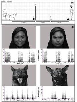 Untuk pertama kalinya , para peneliti telah menunjukkan bahwa anjing harus membentuk representasi mental abstrak emosi positif dan negatif , dan tidak hanya menampilkan perilaku yang dipelajari ketika menanggapi ekspresi orang dan anjing lainnya . Kredit : Gambar milik University of Lincoln.