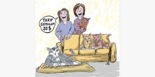 Hotel Khusus Kucing, Tarif Semalam Rp 500.000. Ilustrasi : Handining.