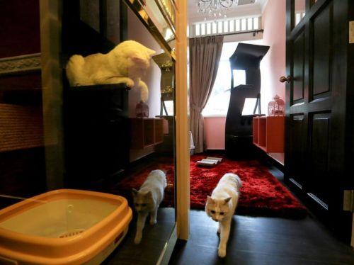 Seekor kucing berjalan keluar dari The Imperial Feline Suite sementara kucing lainnya dari Cabin Feline Suites terlihat pada .