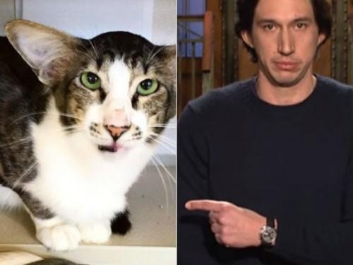 Kucing sekilas mirip aktor