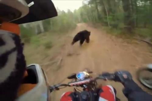 Seekor beruang habis ke jalan di depan dua pengendara sepeda motor di Rusia . Screenshot : Rumble
