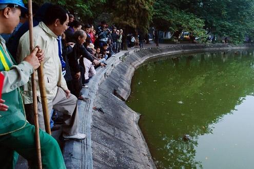 Kura-kura Hoan Kiem merupakan simbol dari kemerdekaan rakyat Vietnam, dan ceritanya tentangnya, didengarkan oleh semua anak-anak sekolah di Vietnam.