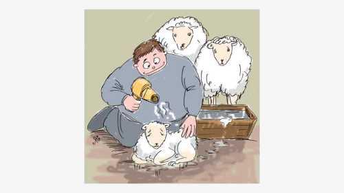 bulu domba dikeringkan pakai pengering rambut